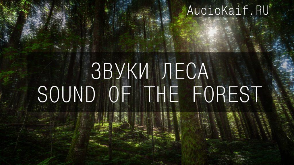 Звуковые 3D эффекты для видеомонтажа - Звуки леса, реки, водопада днём