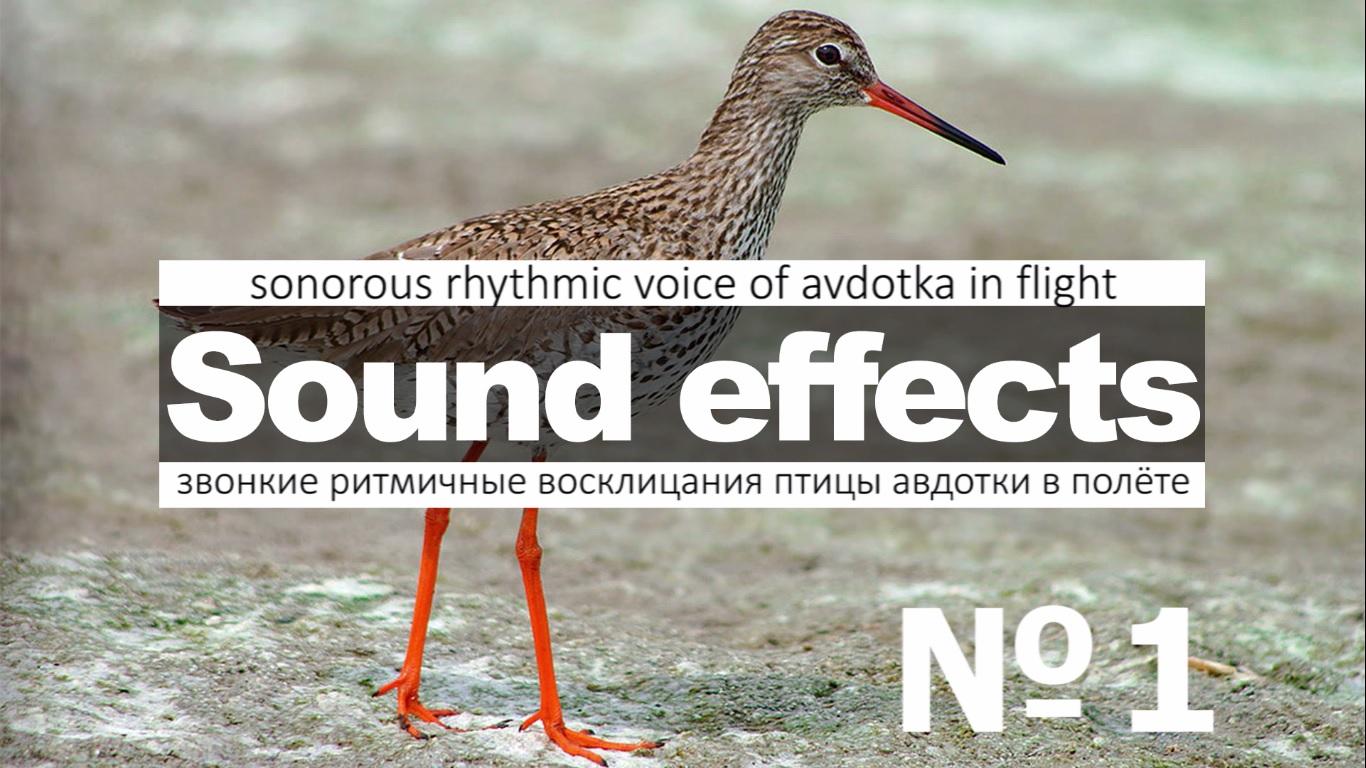 Скачать звуки птицы Авдотки