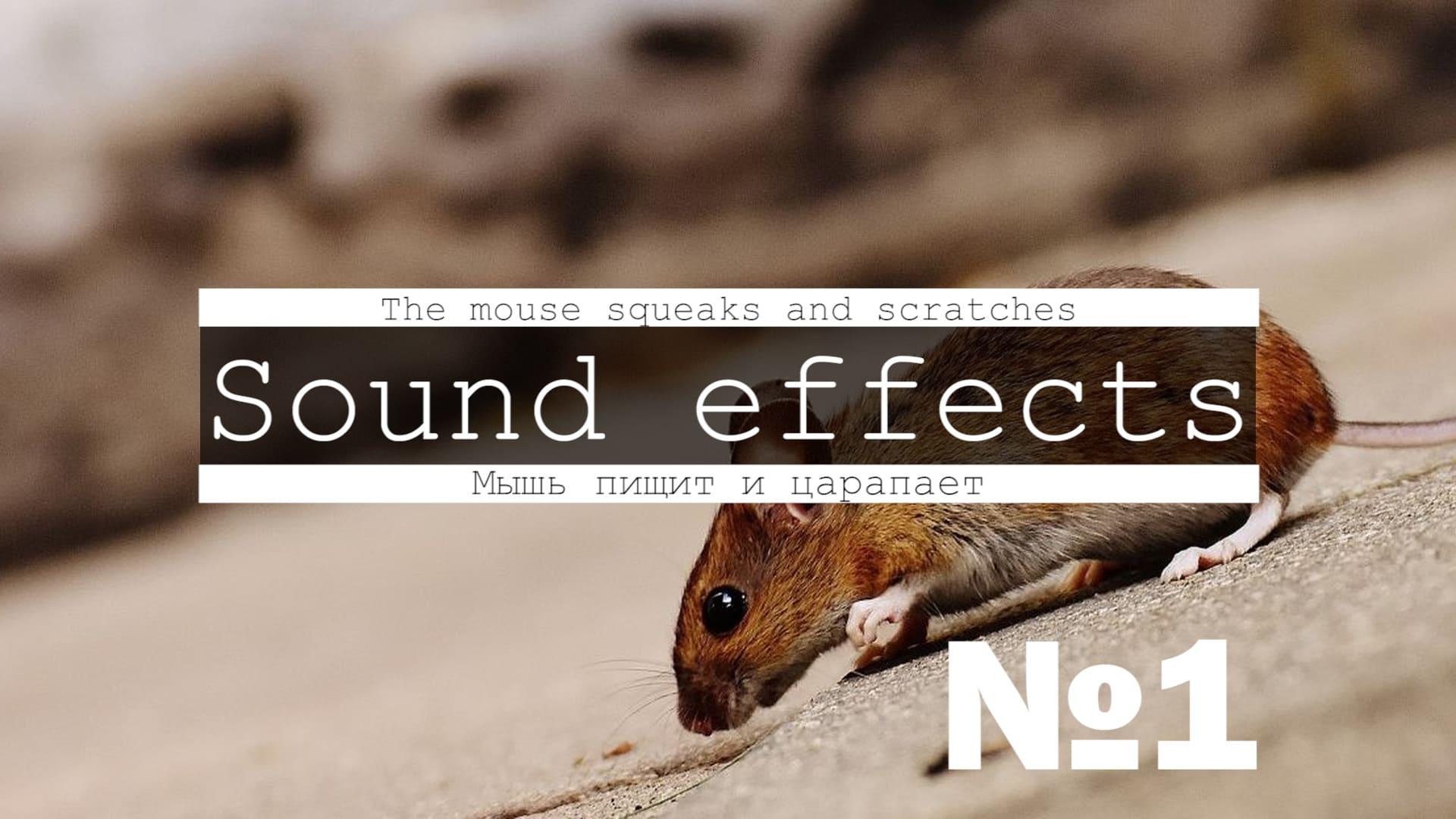 Скачать 3д звук мышки, мышей, писк, крик, скрип, бег