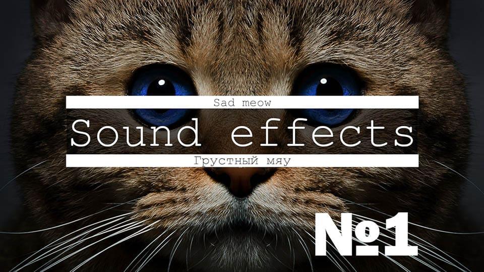 Звуки котов, котят мяукают, мурлыкают