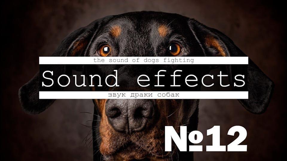 Скачать звуки собак, щенков, псов, больших и маленьких